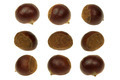 Fresh chestnut isolated 360 Degrees Concept - PhotoDune Item for Sale