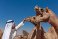 Arab men and camels on the farm - PhotoDune Item for Sale