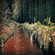 Stream Through Forest - VideoHive Item for Sale