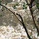 River Raging Through Branches - VideoHive Item for Sale