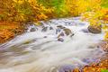 River in Algonquin Park in Ontario, Canada. - PhotoDune Item for Sale