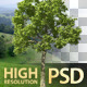 10 Realistic Isolated 3D Trees Vol.1 - GraphicRiver Item for Sale