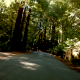 Forrest Road 1 - VideoHive Item for Sale