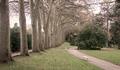 Way of trees - PhotoDune Item for Sale