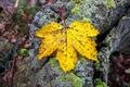 Fall leaf and wood - PhotoDune Item for Sale
