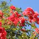 Gardener  - VideoHive Item for Sale