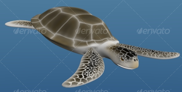 3DOcean Sea turtle 124211
