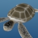 Sea turtle - 3DOcean Item for Sale