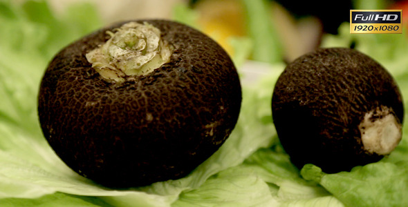 Black Radish and Lettuce