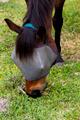 Horse feeding. - PhotoDune Item for Sale