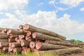 Big Padauk timber storage yaed. - PhotoDune Item for Sale