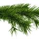 Christmas tree fir branch - PhotoDune Item for Sale