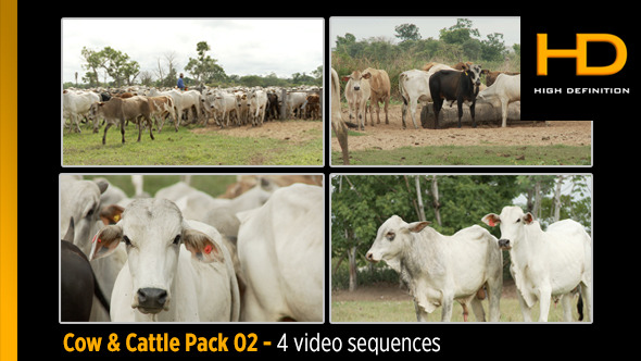 Cow & Cattle Pack 02
