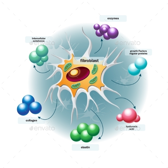 GraphicRiver Structure of Fibroblast Cells 9779491