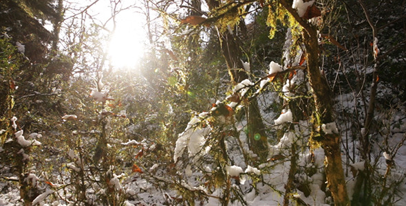Winter Forest With Sun 3