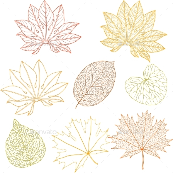 GraphicRiver Leaves Set 9788468