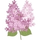 Lilac Flowers - GraphicRiver Item for Sale