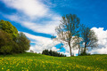 Flower meadow and trees in spring - PhotoDune Item for Sale