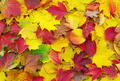 fallen autumn leaves - PhotoDune Item for Sale