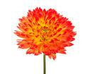 orange flower - PhotoDune Item for Sale