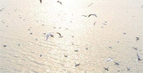 Seagulls 3