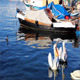Pelicans In The Port - VideoHive Item for Sale