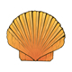Sea Shell - GraphicRiver Item for Sale