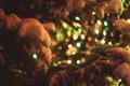 Outdoor chrismas tree - PhotoDune Item for Sale