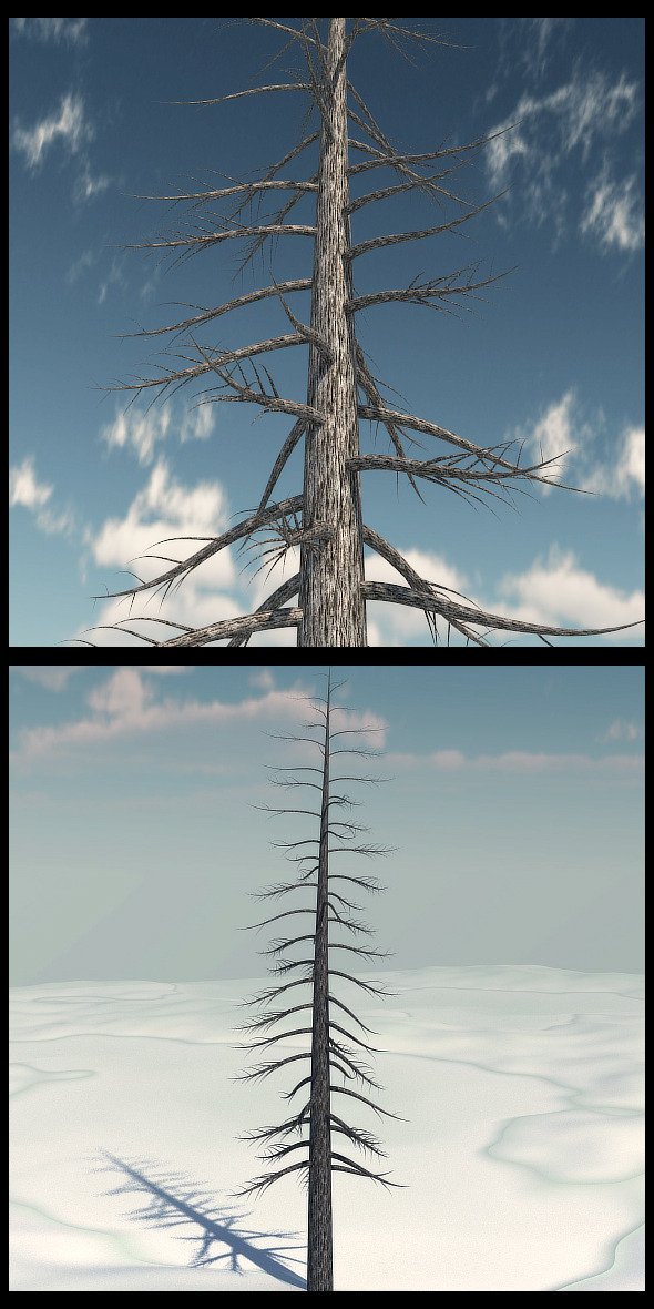 Dead Pine Tree V3 - 3DOcean Item for Sale