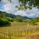 Napa Valley vinyards - PhotoDune Item for Sale