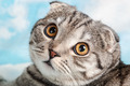 orange eyes cat - PhotoDune Item for Sale