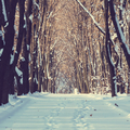 Winter park - PhotoDune Item for Sale
