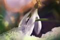 Snowdrop - PhotoDune Item for Sale