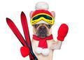 dog ski winter - PhotoDune Item for Sale