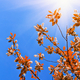 Tree leaves on blue sky - PhotoDune Item for Sale