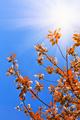 Tree leaves on blue sky - PhotoDune Item for Sale