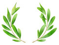 Olive branches - PhotoDune Item for Sale