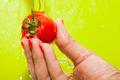Washing Tomato - PhotoDune Item for Sale