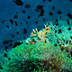 Clown fish with its young in the anemone site - PhotoDune Item for Sale