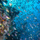 Coral and glass fish in the Red Sea.Egypt - PhotoDune Item for Sale