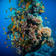 Colorful underwater reef with coral and sponges - PhotoDune Item for Sale