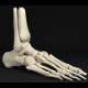 Skeletal Human Foot Bones - 3DOcean Item for Sale