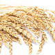 wheat ears - PhotoDune Item for Sale