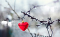 Red heart and barbed wire. - PhotoDune Item for Sale
