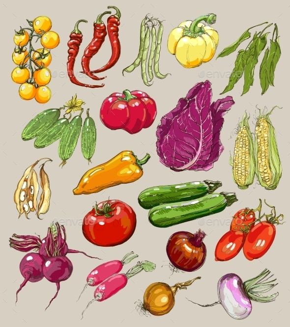 GraphicRiver Collection of Hand-Drawn Vegetables 9812521