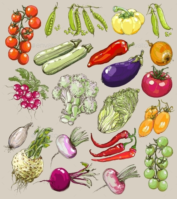GraphicRiver Collection of Hand-Drawn Vegetables 9812551