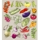 Collection of Hand-Drawn Vegetables - GraphicRiver Item for Sale