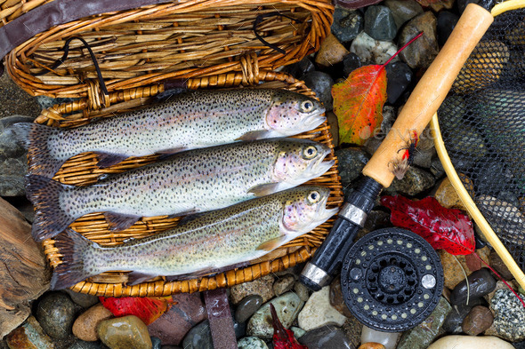 Creel with Native Trout