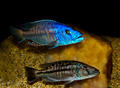 tropical fish - PhotoDune Item for Sale