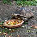 turtle - PhotoDune Item for Sale